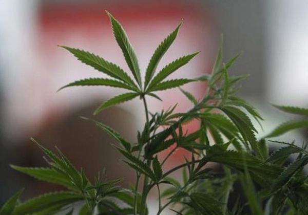 Власти США задержали награнице 3 тонны марихуаны вклубничном варенье
