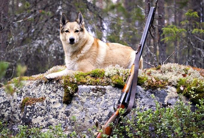 Охотник вКаменецком районе 10 часов провел вколодце