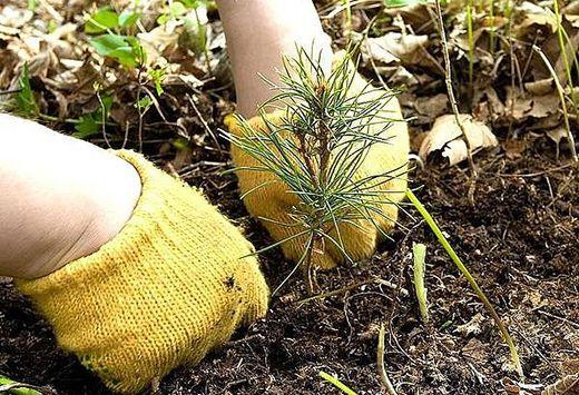 На Брестчине началась подготовка к «Неделе леса – 2015»