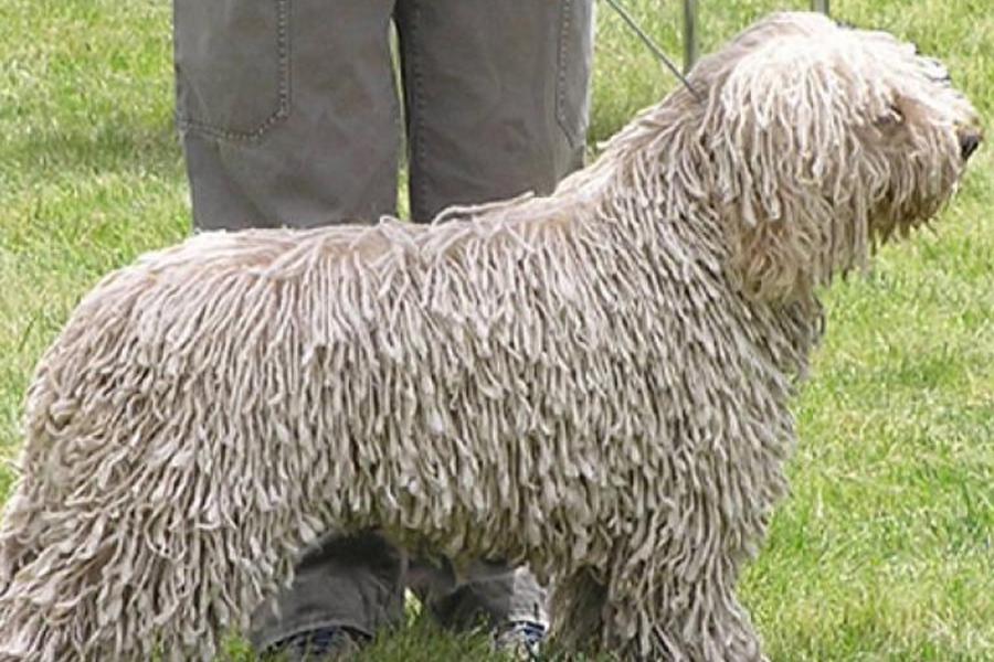 Гражданин Германии выдавал свою собаку заовцу, чтобы неплатить налог