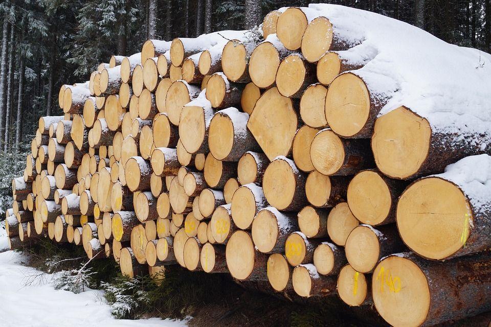 При валке леса вКобринском районе умер многодетный отец