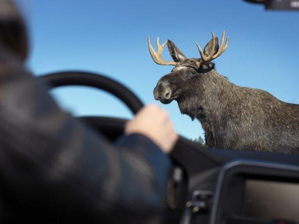 Дикое животное стало причиной ДТП на автодороге Минск-Гродно