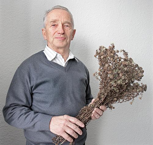 Аптечка природы с Евгением ШМЕРКО. Какие травы помогут при ревматизме?