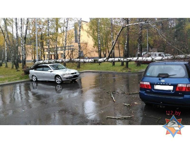 МЧС: Из-за сильного ветра вМинске наавтомобили упали деревья