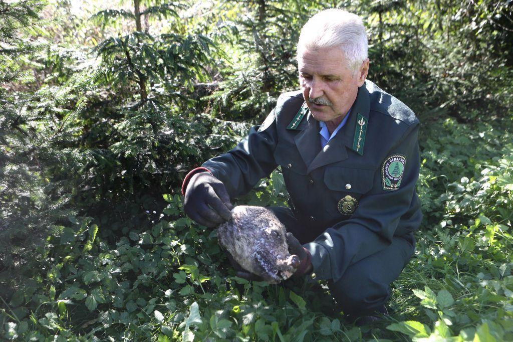 Выводок шакалов обнаружили вГродненской области