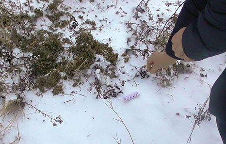 Госинспекторы природоохраны нарейде наткнулись намужчину сконоплей изадержали его