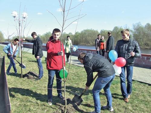 Аллея рябины, посаженная год назад в честь Дня единения в Пинске, скоро расширится