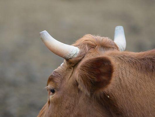 Брестские таможенники обстреляли контрабандистов мяса