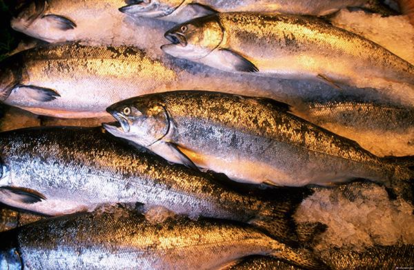 Экспедиция к большой рыбе, варианты изготовления мандулы, как два родных брата жили, нижняя волга