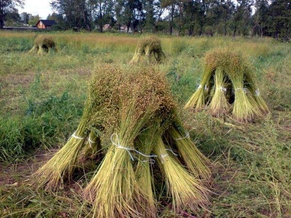 Щи из баранины с капустой - рецепт с фото на Повар. ру 58