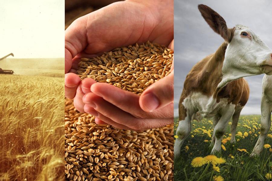 Объем сельхозпроизводства вследующем году вырос на3,4%