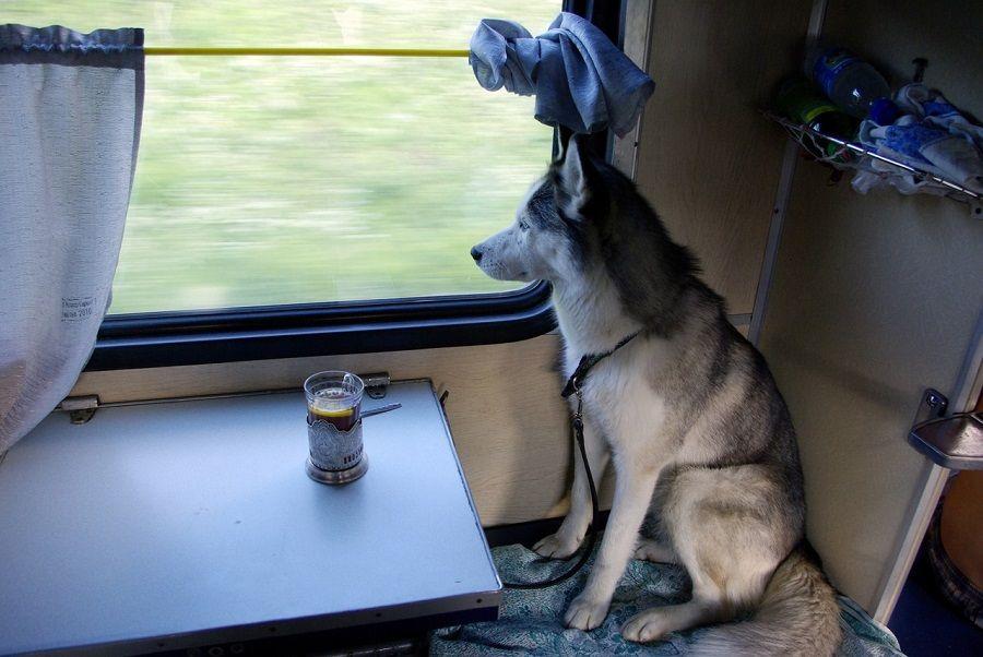 БЖД: с1января возить собак икошек впоездах будет проще