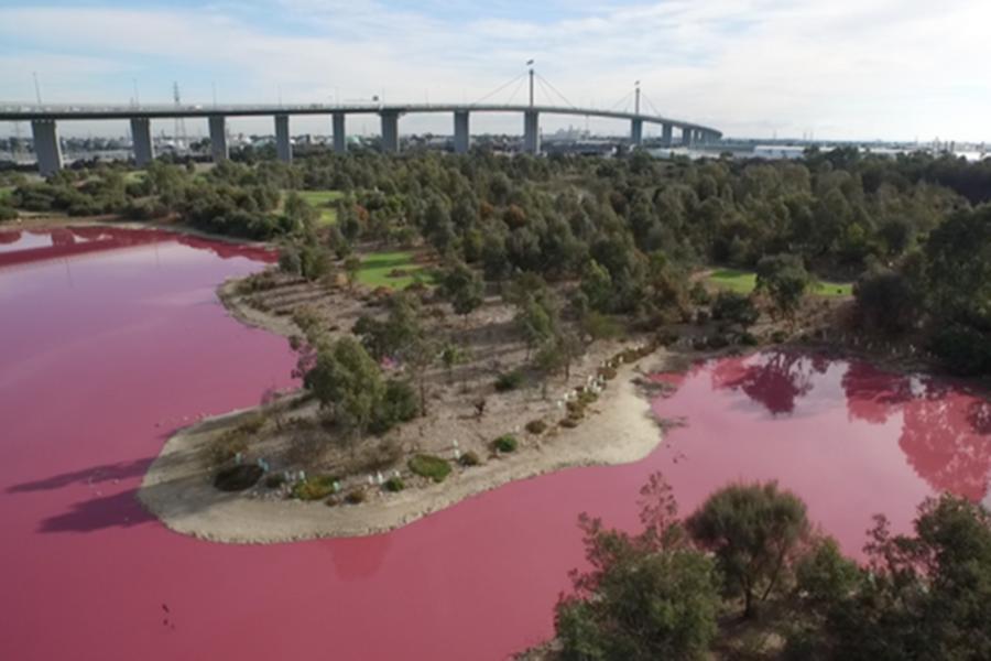 ВАвстралии озеро изменило цвет, став розовым