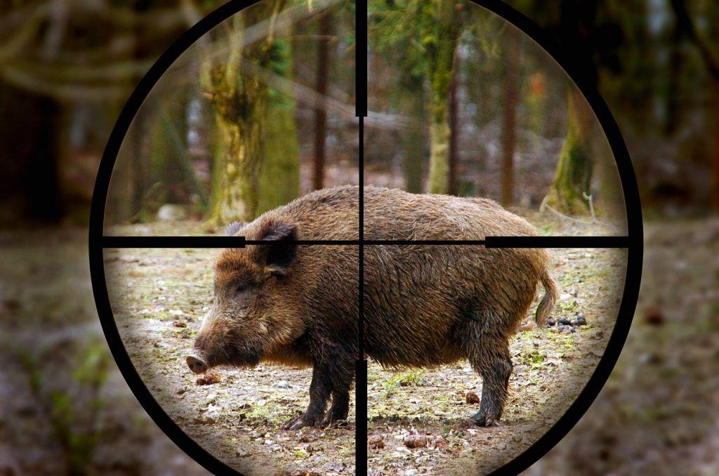 ВКобринском районе охотник застрелил напарника