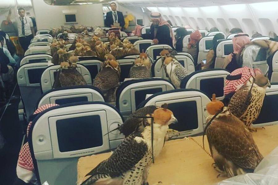 Саудовский принц выкупил самолет для транспортировки охотничьих соколов