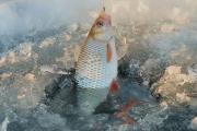 Поздний лед вносит коррективы в стратегию лова