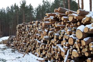 При заготовке леса и дров в Могилевской области пострадали 2 человека