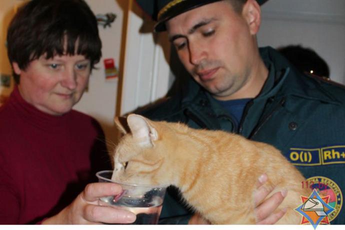ВБресте спасли кошку извентиляционной шахты