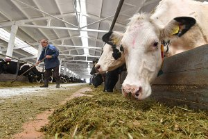Россия отменила запрет на поставки молока из Беларуси