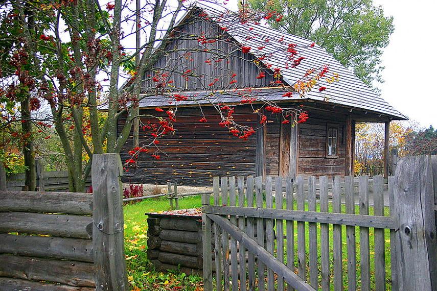 Красная рябина (обыкновенная) – лечебные, полезные свойства и противопоказания, настойка из красной рябины. Когда собирать красную рябину?