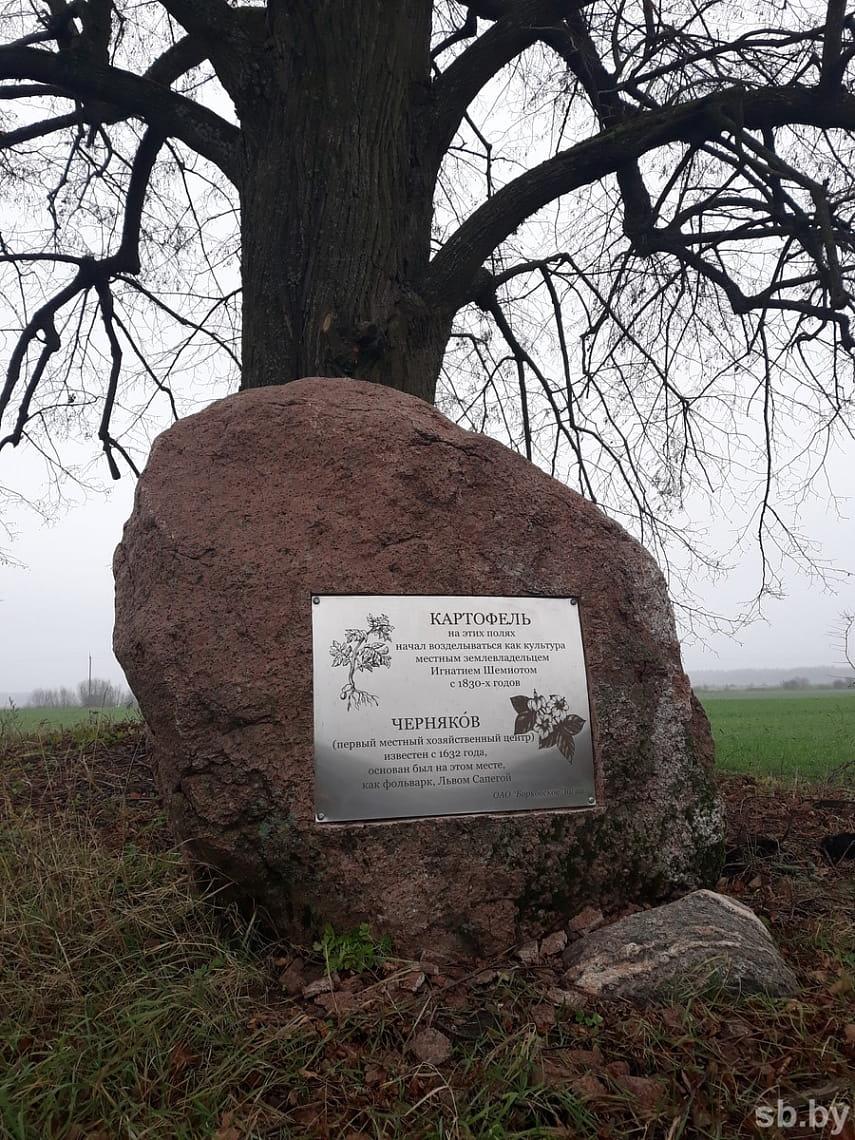 Первый в Беларуси памятник картошке появился на Брестчине (фото)