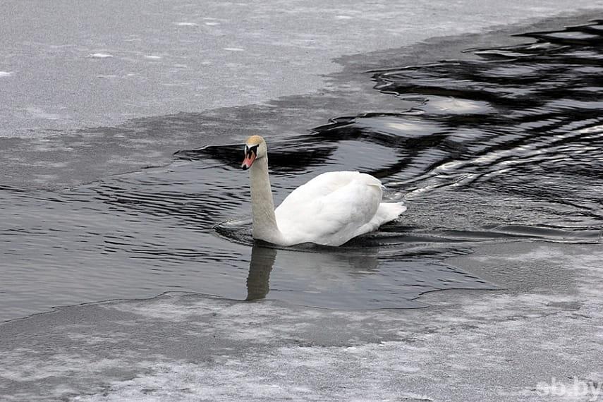 На реках Беларуси начал образовываться лед.