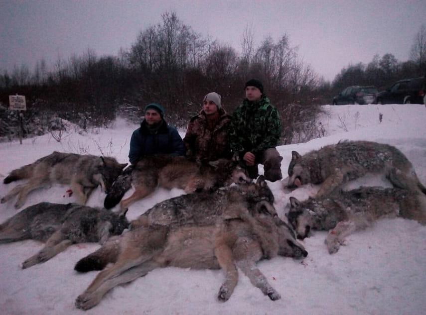 лениво волки в деревне фото носили