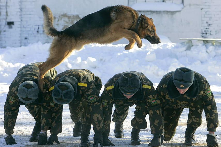 b57a85cfc754 Восемь лет напряженной службы — и на «пенсию». Сегодня трудно представить  охрану границы Союзного государства без служебных собак.