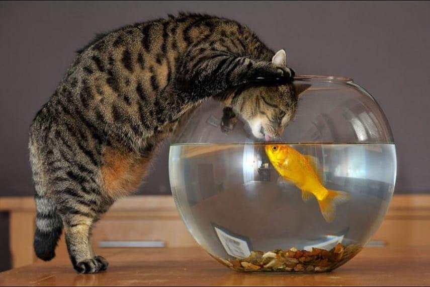 Прикольные картинки рыбками, мария картинки