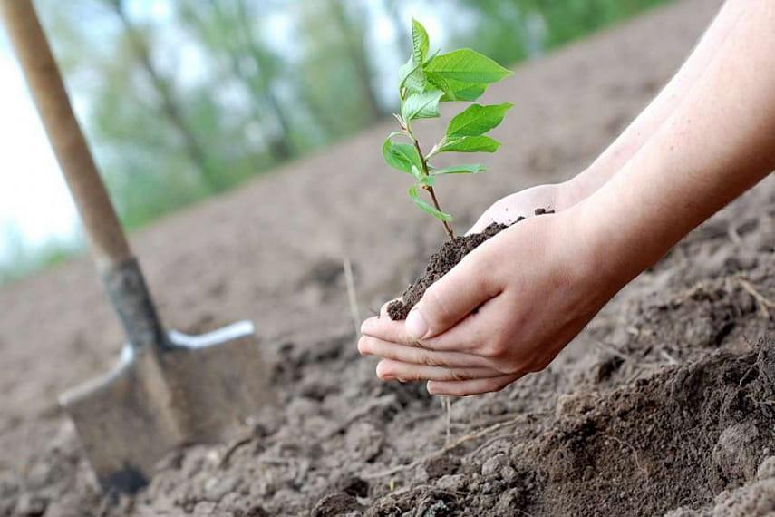 В Беловежской пуще весной высадят новые леса на 200 гектарах