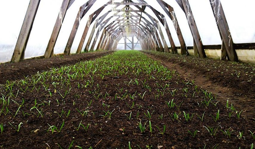 Биодинамика – одно из направлений органического сельского хозяйства