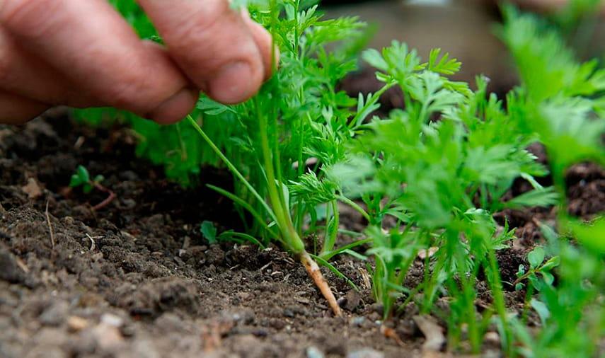 Как сыпать семена по одному