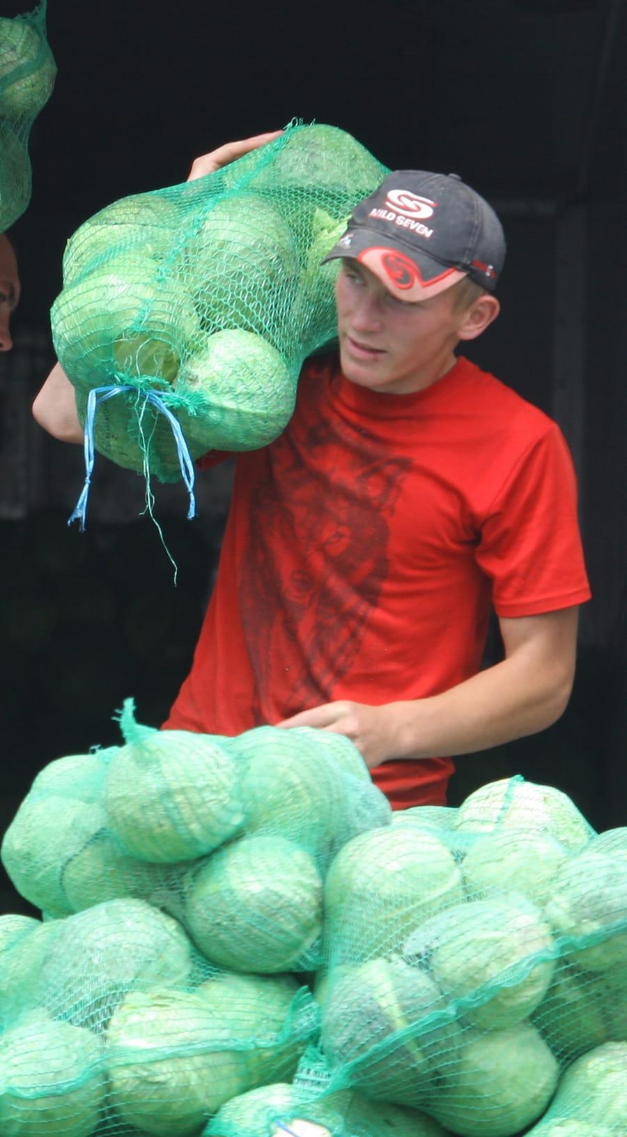 Время квасить: домашний метод закваски капусты