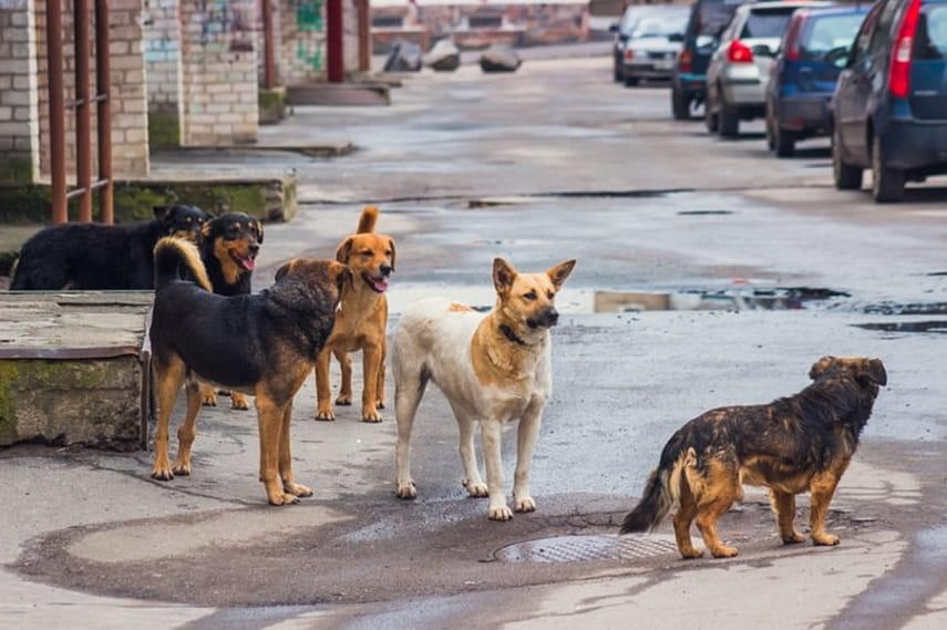 Ответственность за безнадзорных собак