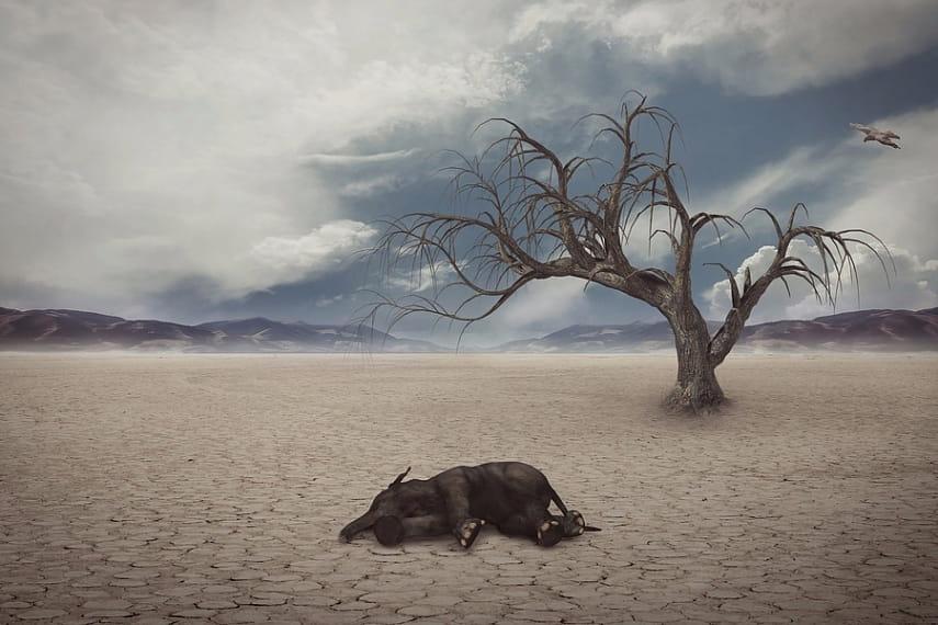 Ученые: массовое вымирание растений и животных уже началось